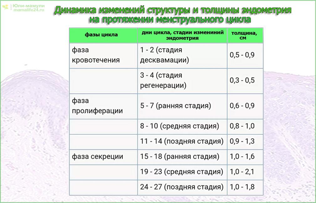 Динамиа измениний структуры и толщины эндометрия таблица