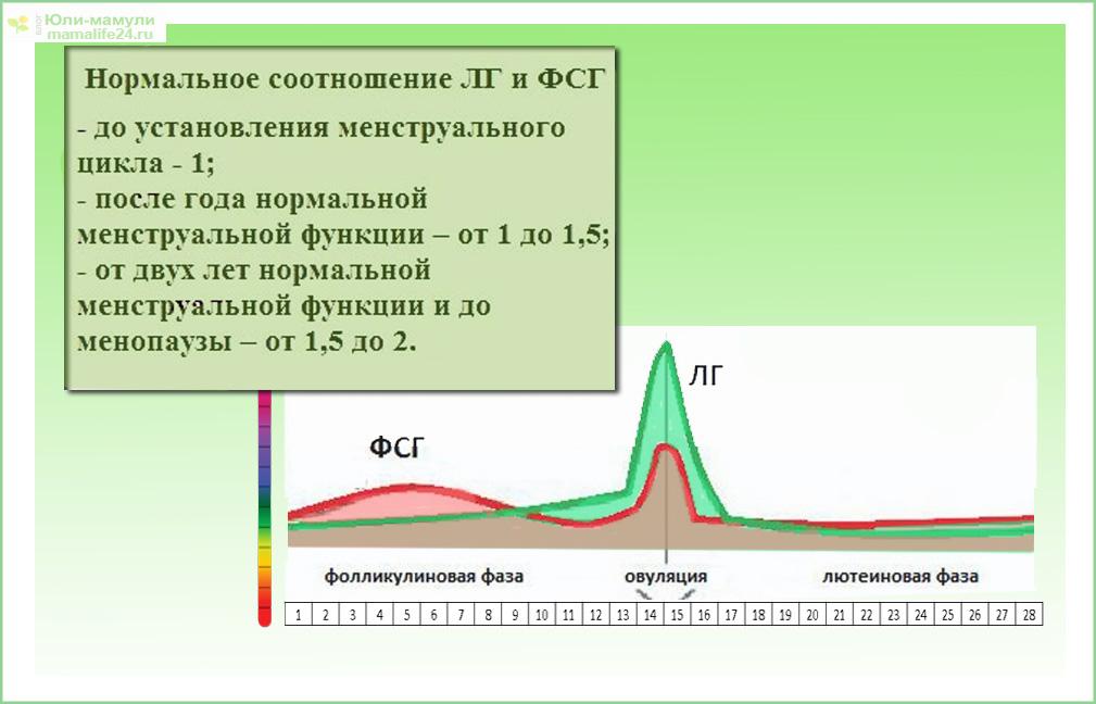ЛГ и ФСГ соотношение схема
