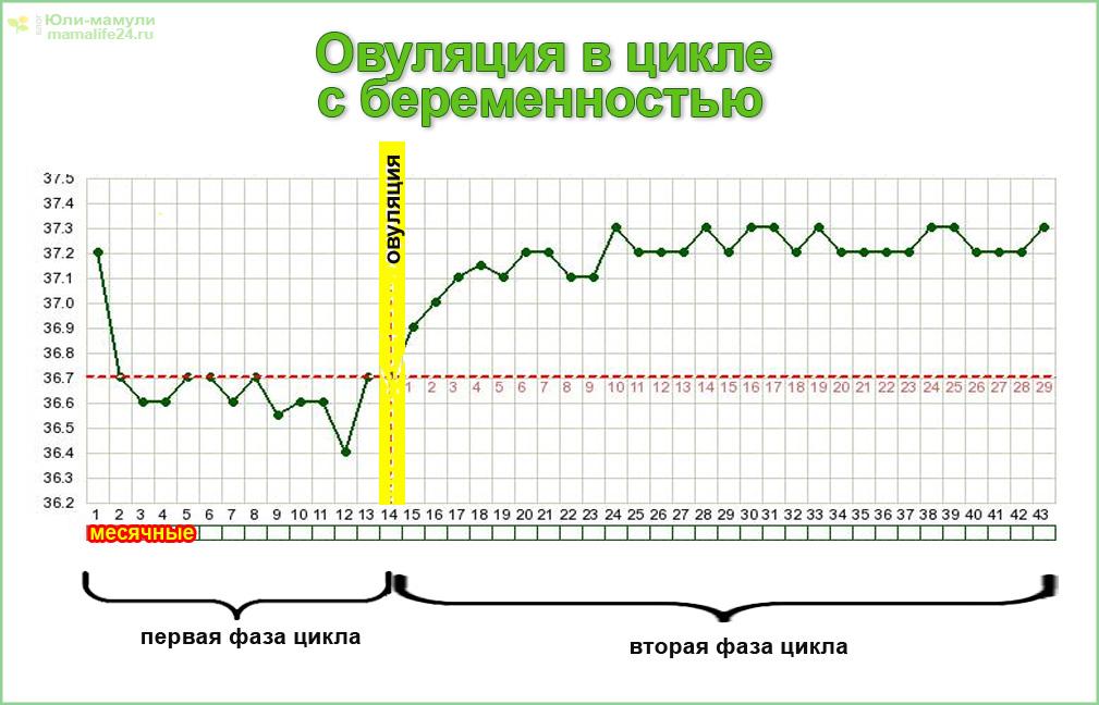 График График овуляции в цикле с беременности