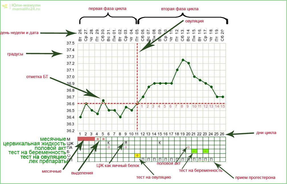 График БТ расшифровка