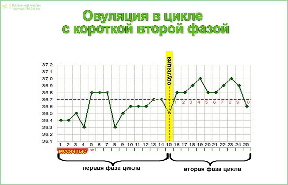 График овуляции в цикле с короткой первой фазой