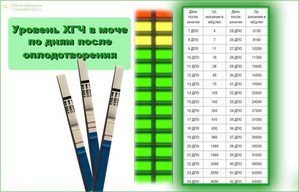 через сколько появляются первые признаки беременности - уровень ХГЧ в моче таблица