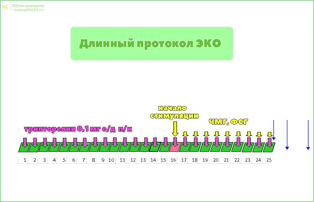 ЭКО длинный протокол по дням