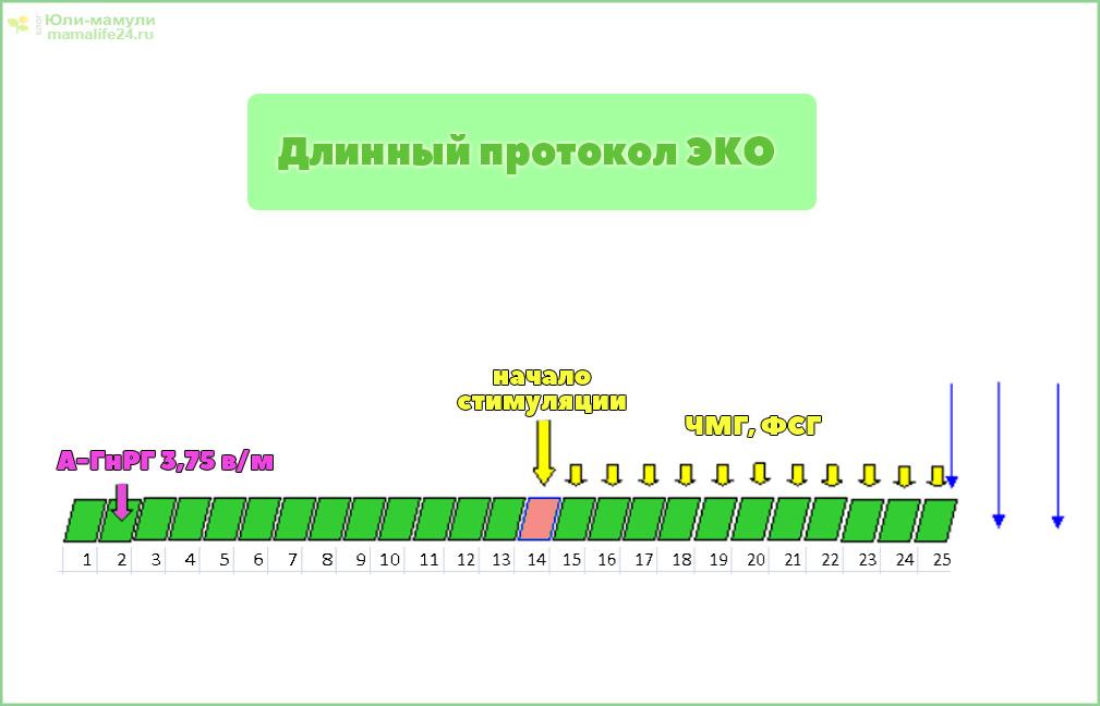 Длинный протокол ЭКО по дням