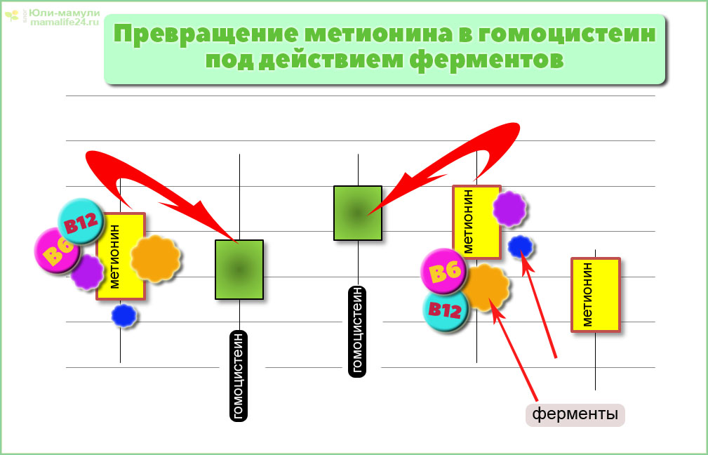 Превращение метионина в гомоцистеин под действием ферментов