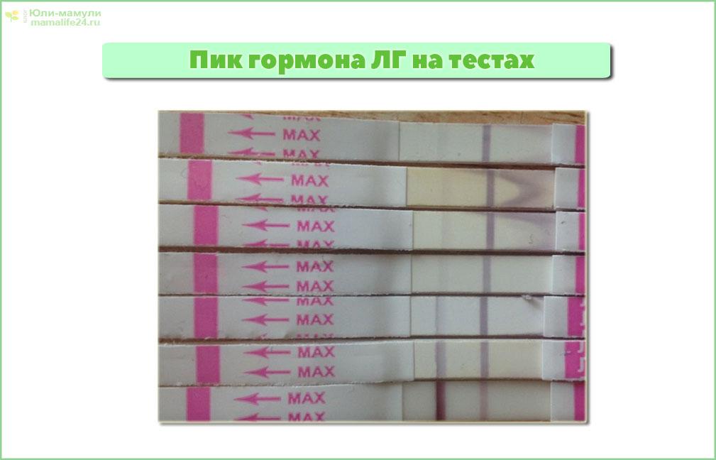 Динамика гормона ЛГ на тестах на овуляцих