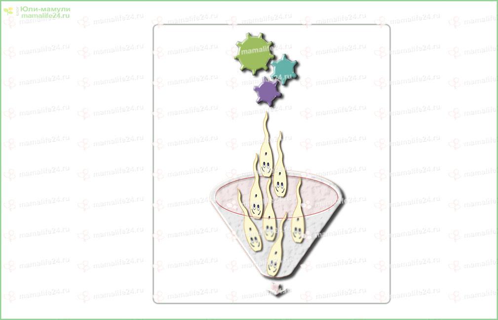 Конвейер сперматозоидов рисунок