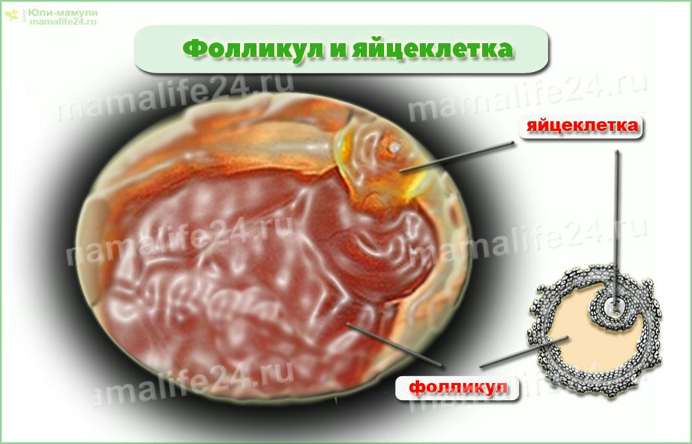 через неделю после овуляции болит яичник