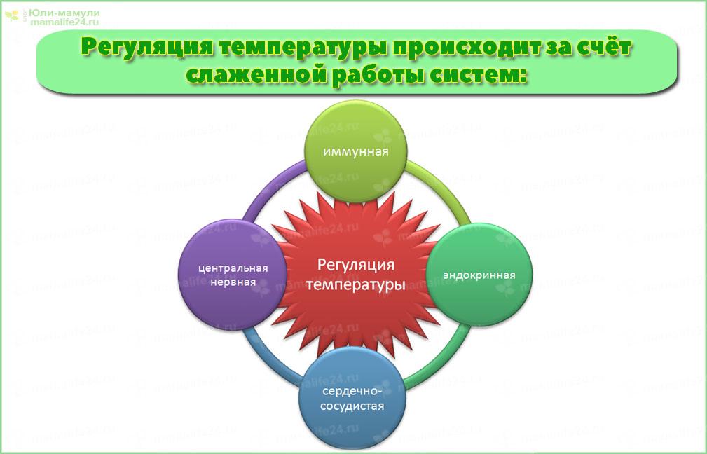 Какие системы регулируют температуру тела