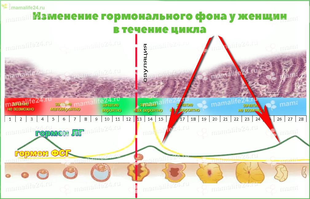 Изменение гормонального фона у женщин в течение цикла