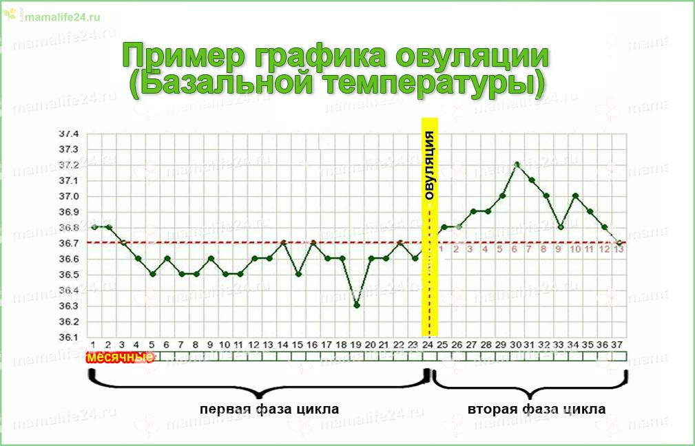 график базальной температуры чтобы определить когда будет овуляция