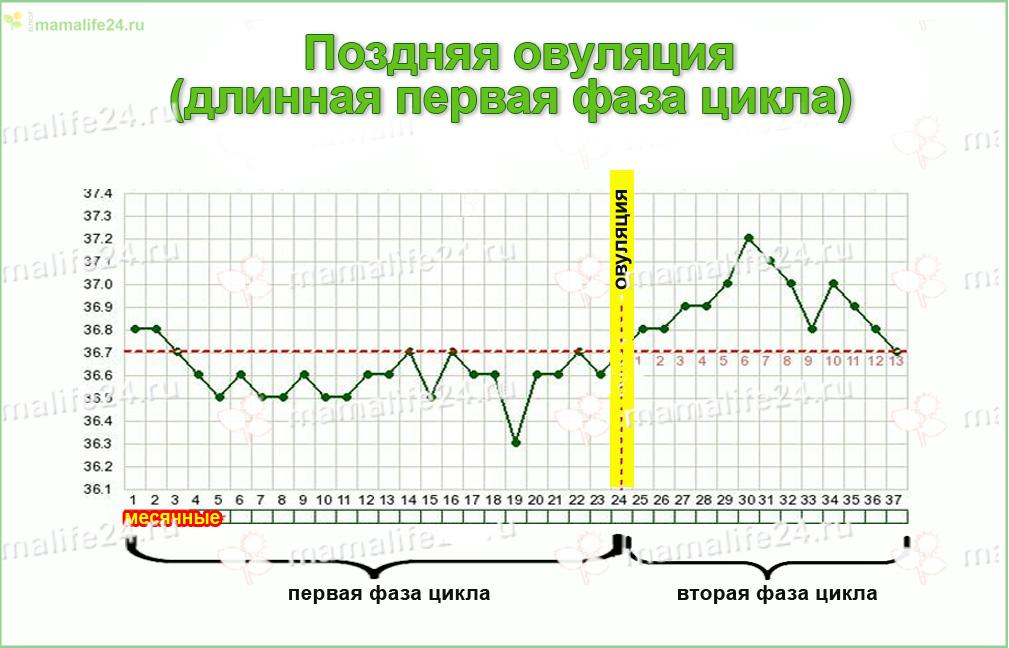 Поздняя овуляция овуляция на какой день цикла
